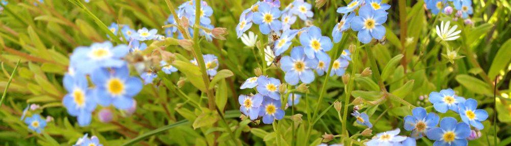 cropped-finestflowers.jpg